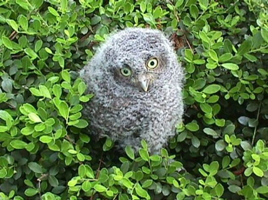 Owl10jpg.img_assist_custom-600x450
