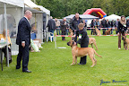 20100513-Bullmastiff-Clubmatch_31062.jpg