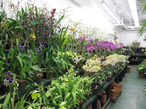 Making my way to the orchid selection.