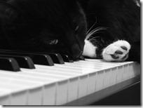 gato pianista blogdeimagenes (30)