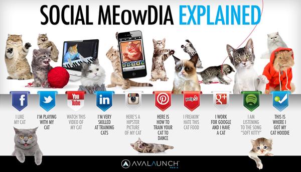 réseaux sociaux et petits chats