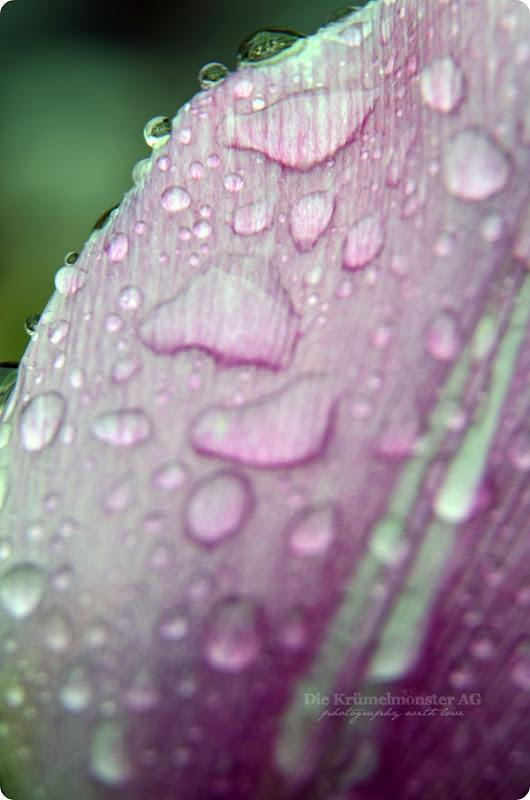 MakroMontag_Raindrops (3)