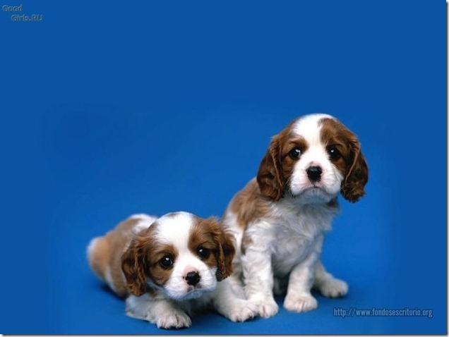 fotos de perritos imagenesifotos.blogspot (1)