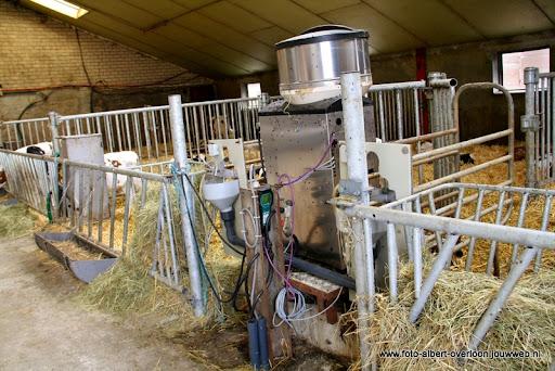 koeien kijken boer martij 18-06-2011 (35).JPG
