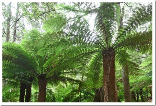 100103_Mt-Field-National-Park,-Tasmania_185