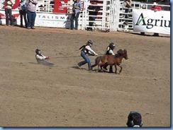 9516a Alberta Calgary - Calgary Stampede 100th Anniversary - Stampede Grandstand - Calgary Stampede Wild Pony Race
