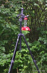 Kit's Hummer feeder suspended from David's Tripod