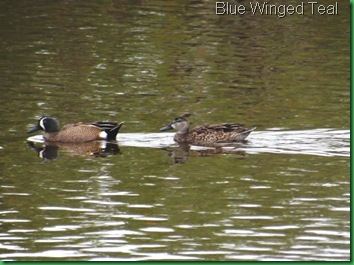 Mrazek Pond & Snake Bight Trail 012
