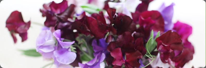 6a0120a5914b9b970c014e89858b3f970d floralie