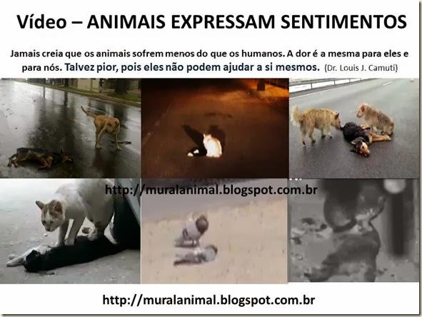 Vídeo – ANIMAIS EXPRESSAM SENTIMENTOS