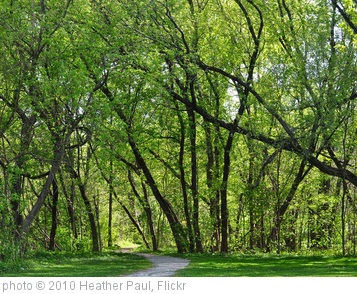 'Green tree path' photo (c) 2010, Heather Paul - license: http://creativecommons.org/licenses/by-nd/2.0/