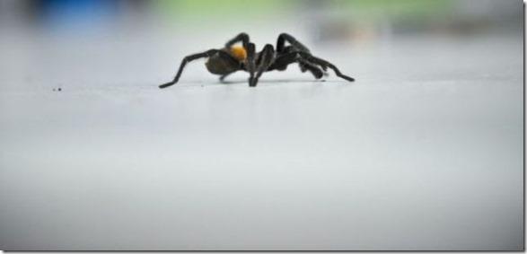 spider-farmer-juan-18