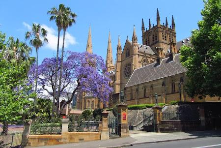 Imagini Australia: Sydney - Copaci mov, palmieri, cladiri noi si vechi
