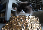 Oh, wow!!!  Was that ever good!  Not only a gilded bowl, I'm envisioning one that's also encrusted with precious jewels!  Cats should also be treated like royalty!  In ancient Egypt, after all, felines were worshiped as gods!