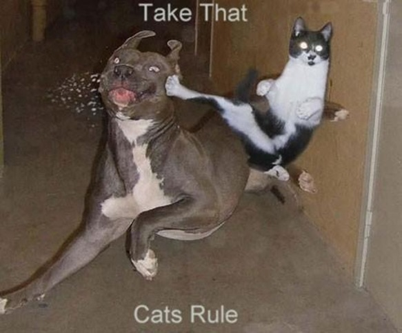 Karate-Cat-Fighting-with-Dog