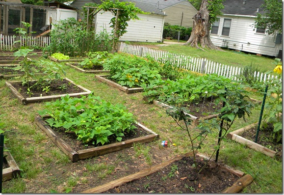 Planting A Backyard Garden simply and truly: companion planting in a backyard garden