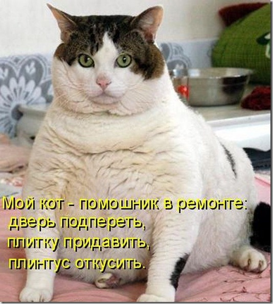 kotomatrix_0981