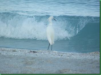 At Nokomis Beach (10)