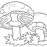 champignon-(7).jpg