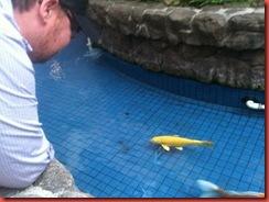 Ala Moana Fish