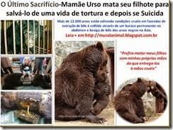 O Último Sacrifício-Mamãe Urso mata seu filhote