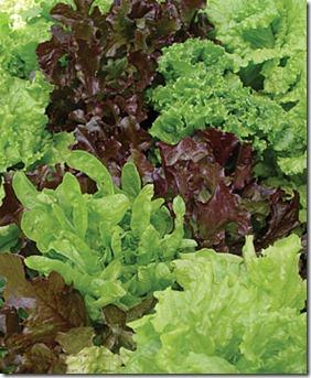 Blend Lettuce