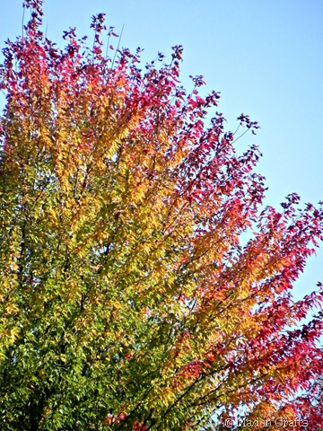 ombre fall leaves
