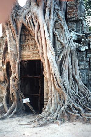 Imagini Angkor Wat: arbore imbratisand o cladire