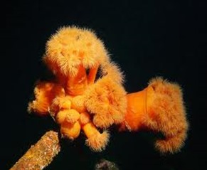Amazing Pictures of Animals, photo, Nature, exotic, funny, incredibel, Zoo, Sea anemones, Actiniaria, Alex (12)