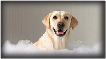 cane bagno