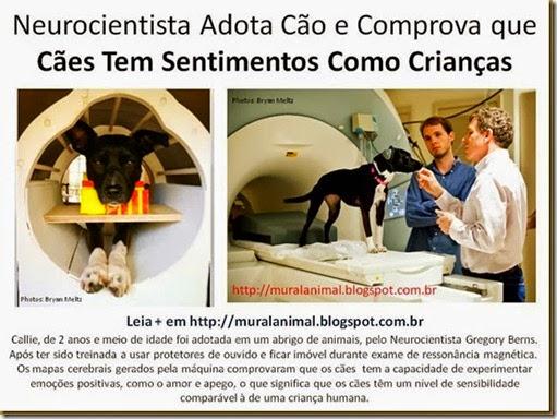 Neurocientista Adota Cão e Comprova que Cães Tem_thumb[1][4]