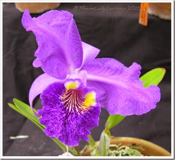 02-08-orchids14