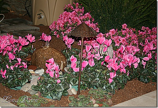 HGS_Cyclamen_Bed