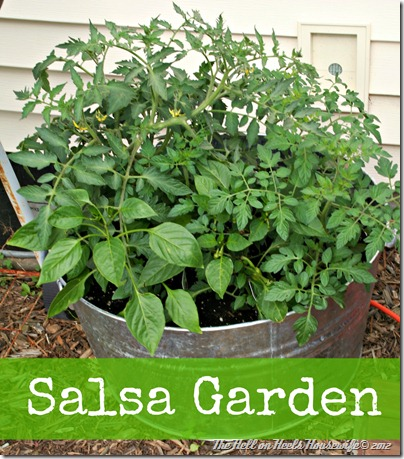 salsa garden
