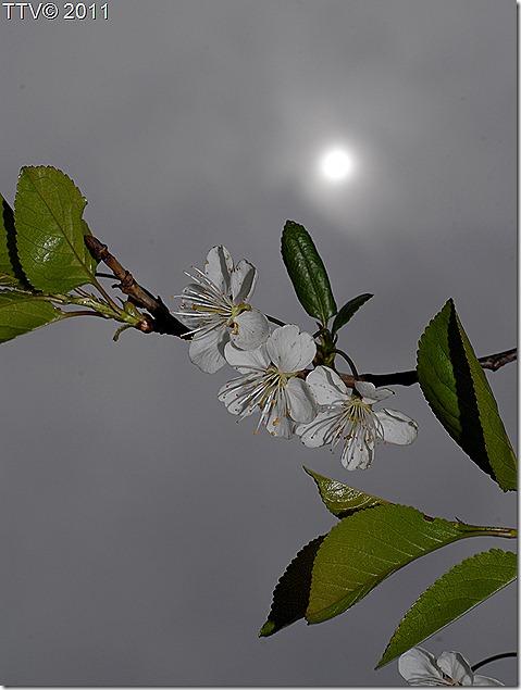 kukkia 041