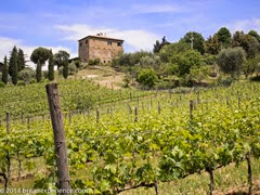 vineyard-olive-grove-2