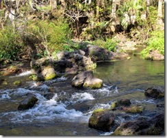 """Rapids"" on Hillsborough River"
