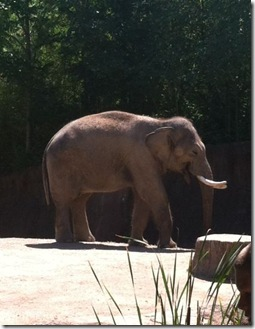 3_laughing elephant