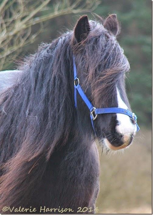 5-horse