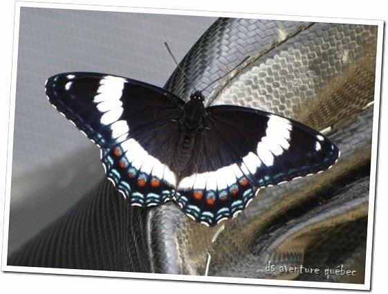 DS Aventure Quebec - Papillon Parc Papineau Labelle