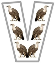 Vv vulture