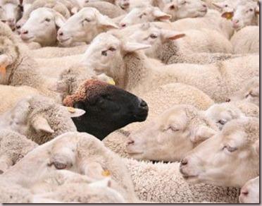 oveja negra