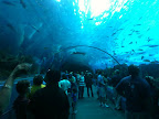 The tunnel of water, at the aquarium...