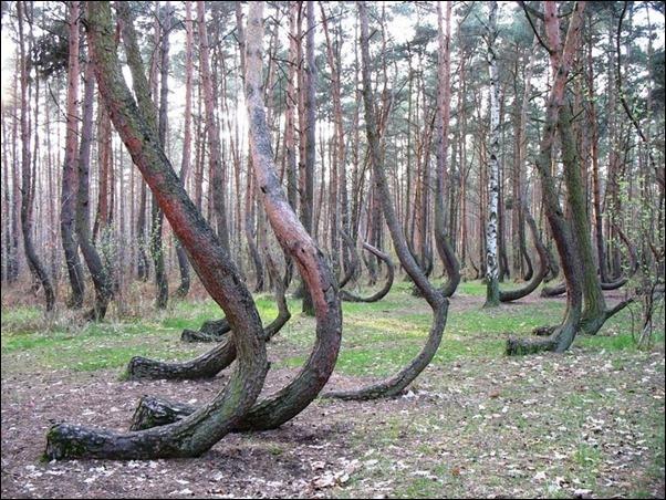 اشجار غريبة2