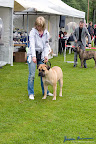 20100513-Bullmastiff-Clubmatch_31097.jpg