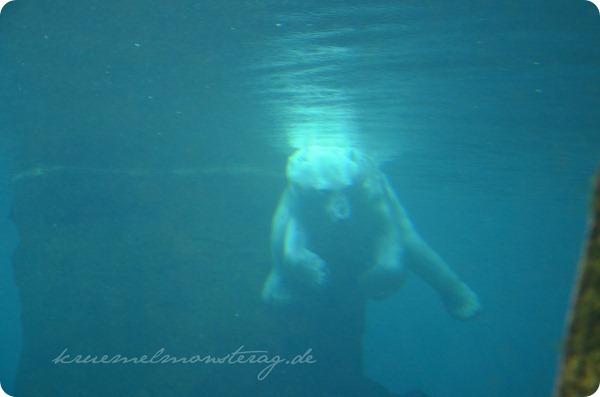 Wremen 20zwölf Tag 6 Zoo am Meer - Eisbär UW (3)