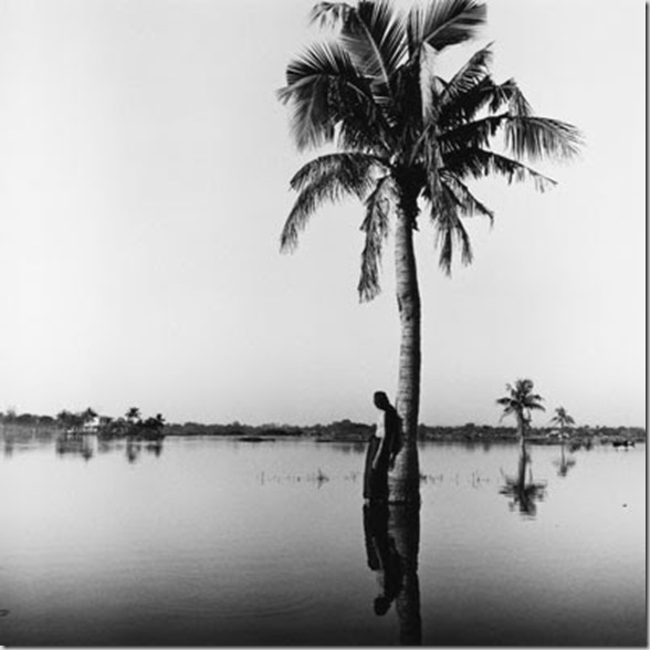 04.06-Evening-Palm
