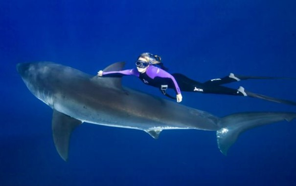woman swimming with big white shark 00