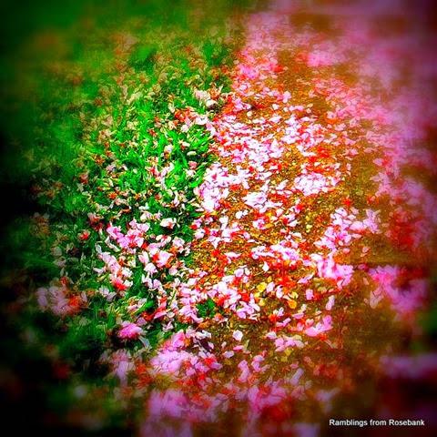 cherry petal confetti