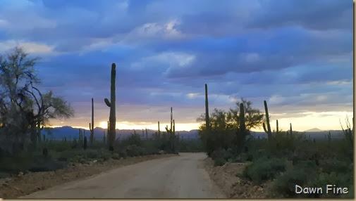 Saguaro NP West_083